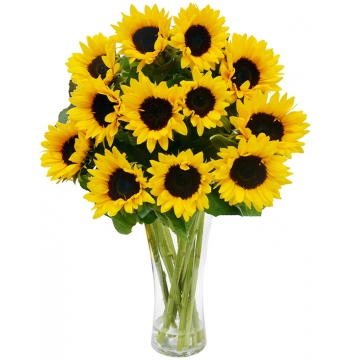 two dozen sunflower in vase to manila