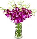 Send Orchids Plants To Manila