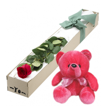 Single Red Rose in Box with Red Bear Send to Manila