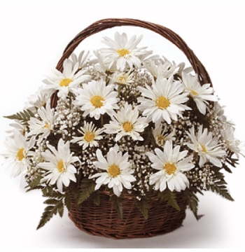 White Daisy Sympathy Basket Delivery to Manila Philippines