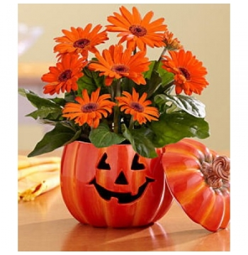 The Great Gerbera Pumpkin in a Pumpkin Vase to Manila