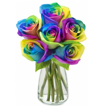 online six ecuadorian roses manila