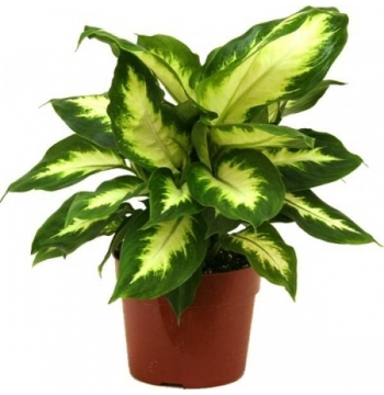 Lush Green Plant Arrangement