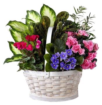 Send Mixed Green Plants To Manila