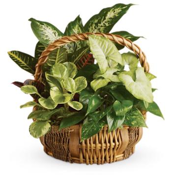 Full Green Garden Basket