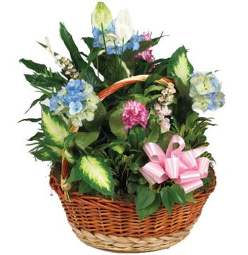 Green Planter in Basket