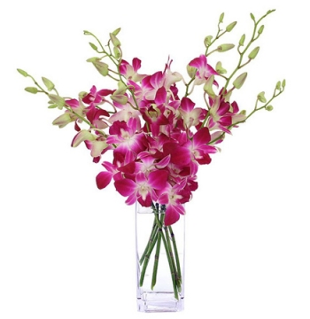 6 Pink Orchids in a Vase