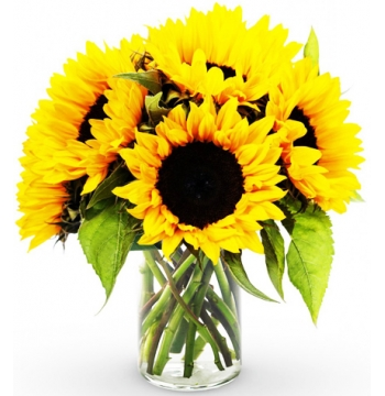 send Six sunflower in a vase to manila