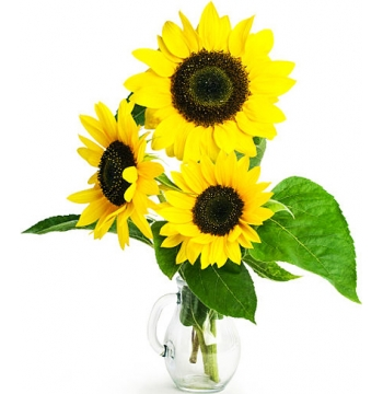 send three sunflower in a vase to manila
