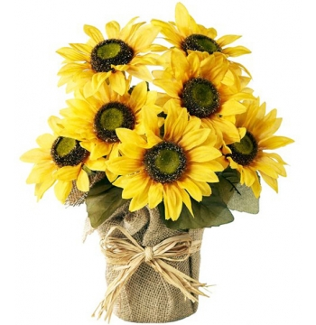 send Seven sunflower in bouquet to manila